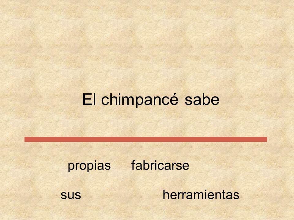El chimpancé propiasfabricarse sabesusherramientas