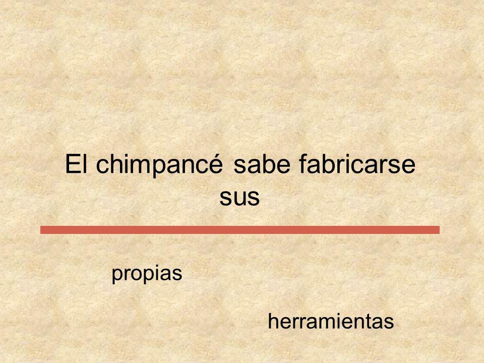 El chimpancé sabe fabricarse propias susherramientas