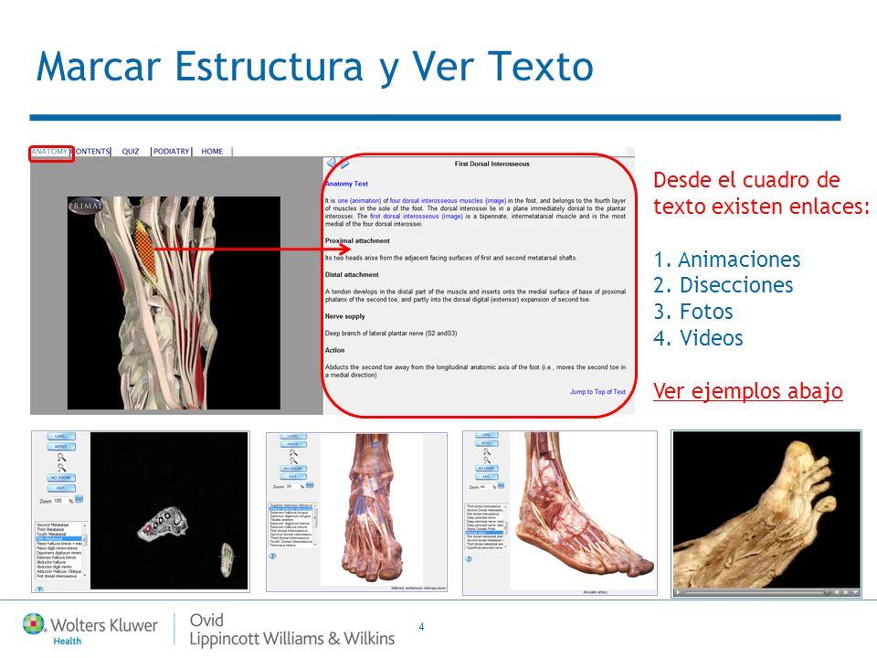 4 Marcar Estructura y Ver Texto Desde el cuadro de texto existen enlaces: 1.