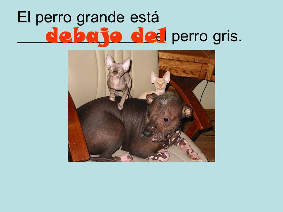 El perro está ____________________ el gato. enfrente del