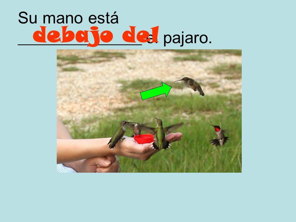 Aquel pájaro está _______________ de su mano. encima de