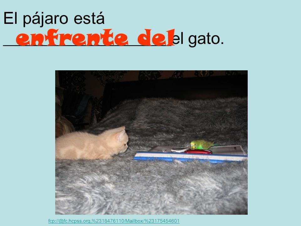 El gato está _______ la jaula. fcp://@fc.hcpss.org,%2318476110/Mailbox/%23175454601 en dentro de