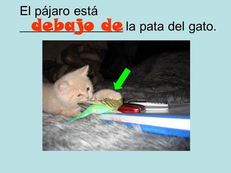 La pata (pie) del gato está ________________ el pájaro. encima del