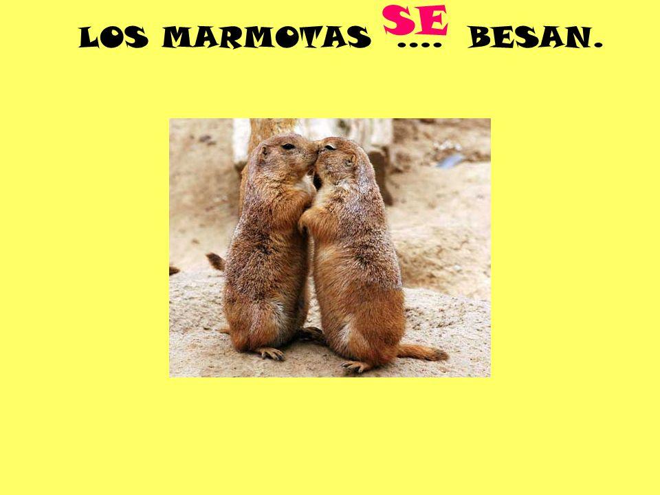 LOS MARMOTAS …. BESAN. SE