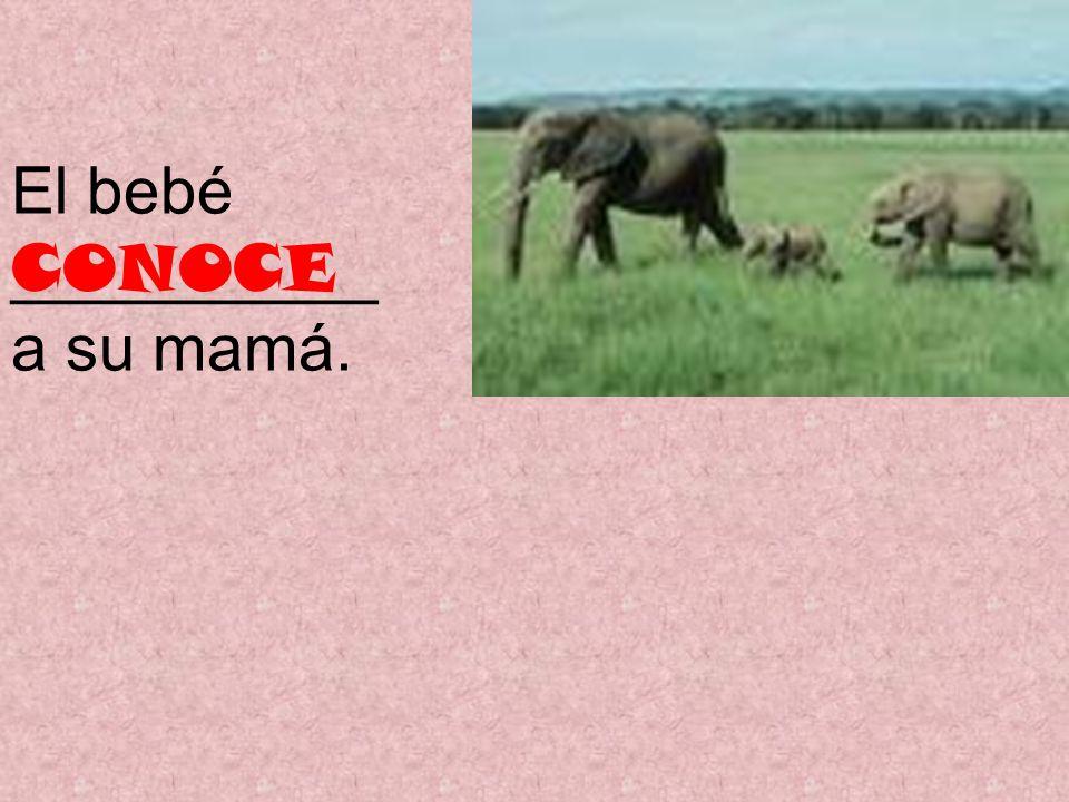El bebé __________ a su mamá. CONOCE