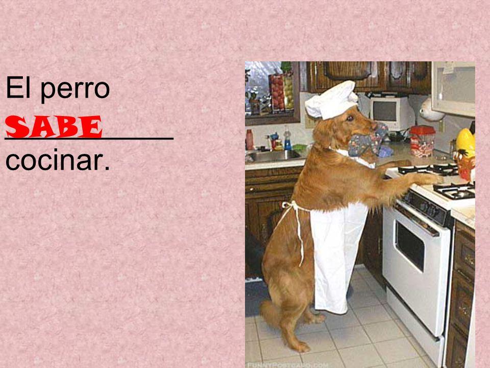 El perro __________ cocinar. SABE