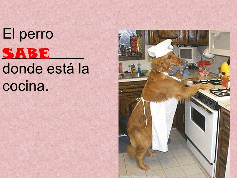 El perro __________ donde está la cocina. SABE