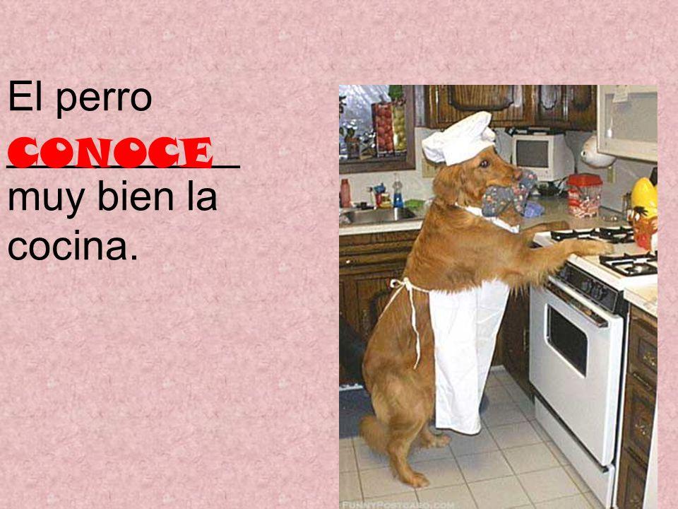 El perro __________ muy bien la cocina. CONOCE