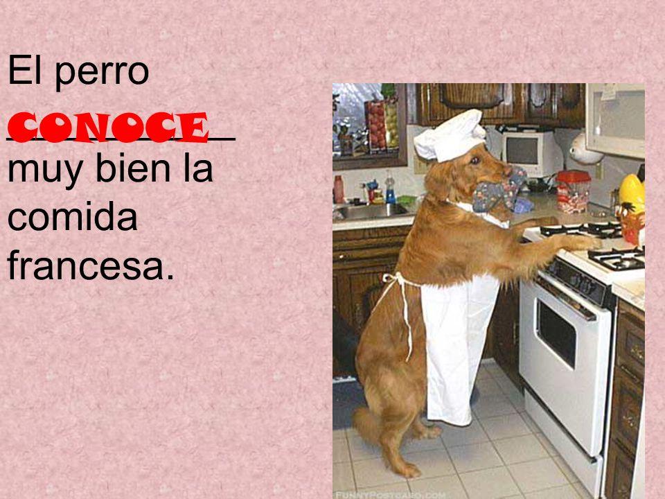 El perro __________ muy bien la comida francesa. CONOCE