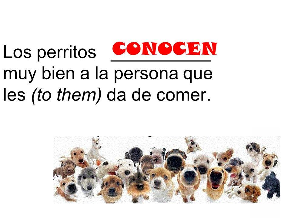 Los perritos __________ muy bien a la persona que les (to them) da de comer. CONOCEN
