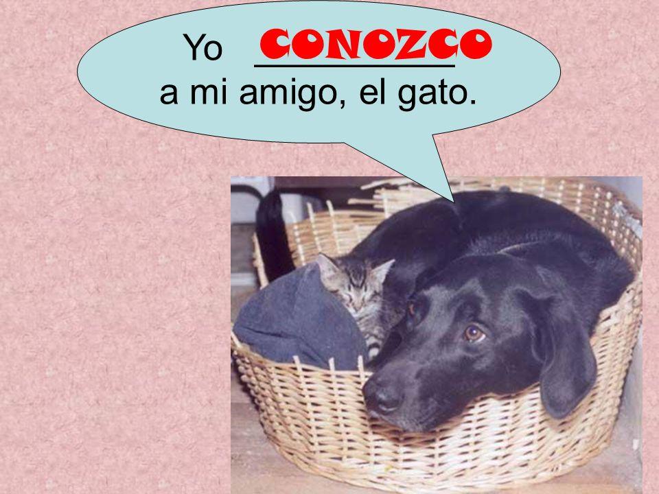 Yo __________ a mi amigo, el gato. CONOZCO