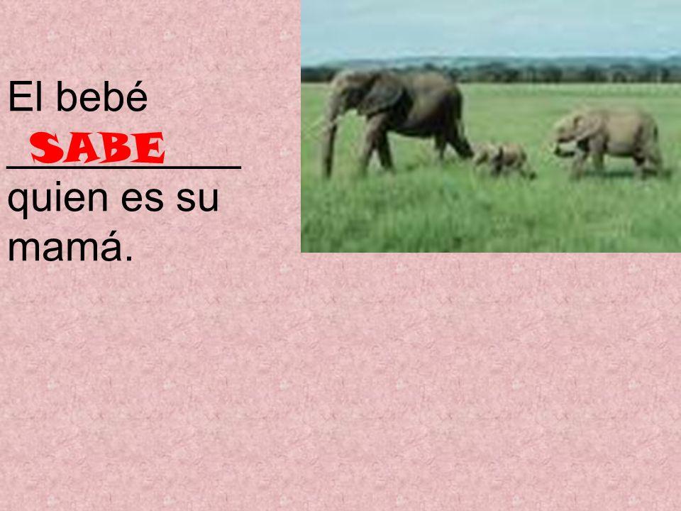 El bebé __________ quien es su mamá. SABE