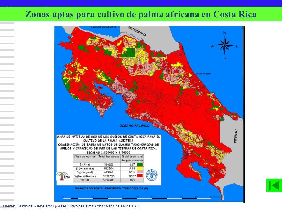 G E LT E C Fuente: Estudio de Suelos aptos para el Cultivo de Palma Africana en Costa Rica. FAO Zonas aptas para cultivo de palma africana en Costa Ri