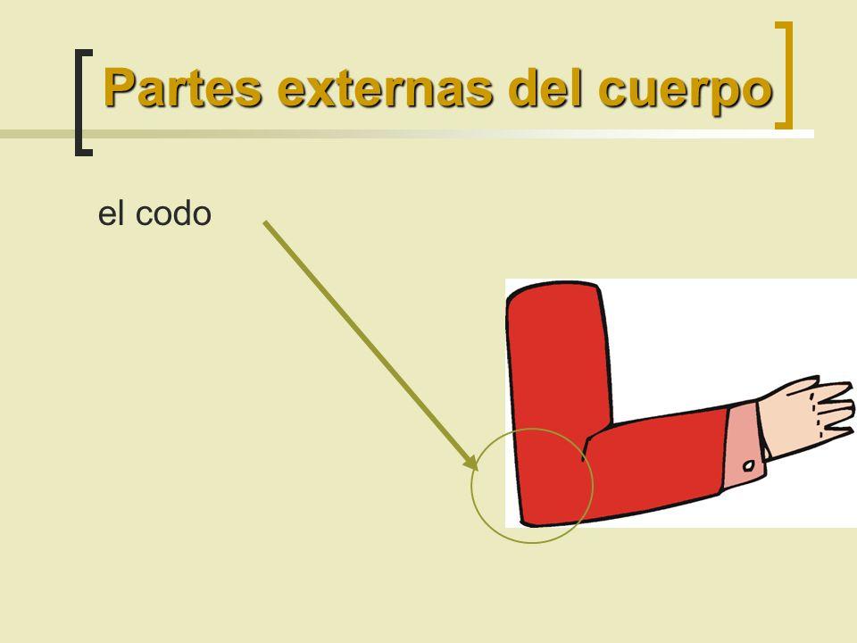 el codo Partes externas del cuerpo