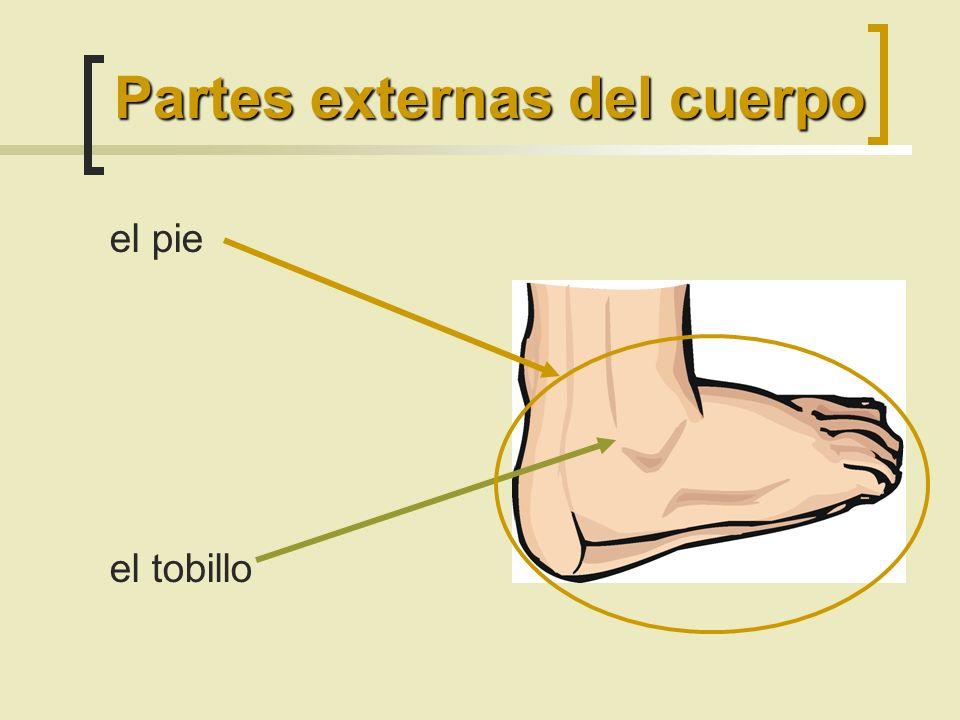 el pie el tobillo Partes externas del cuerpo