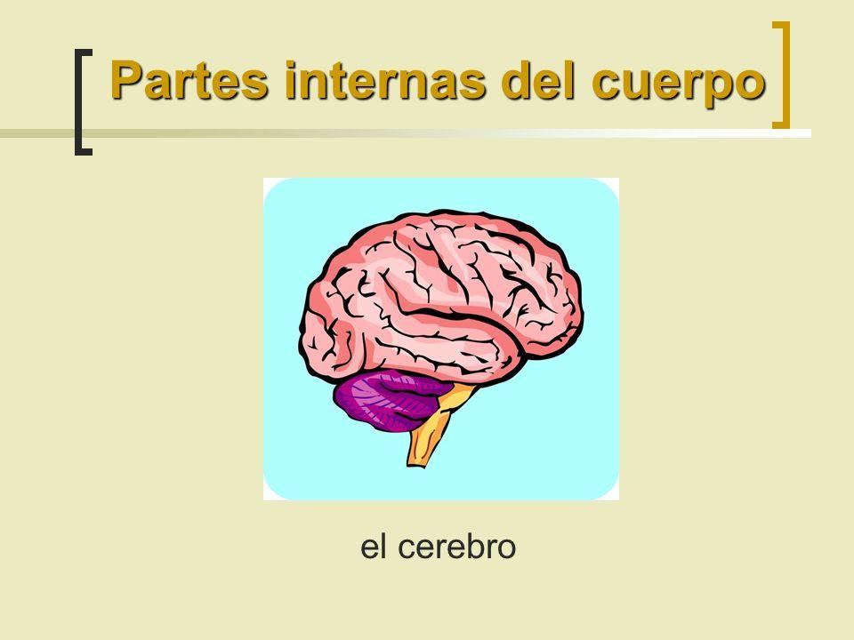 el cerebro Partes internas del cuerpo
