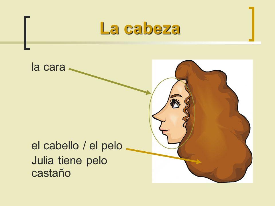 la cara el cabello / el pelo Julia tiene pelo castaño La cabeza