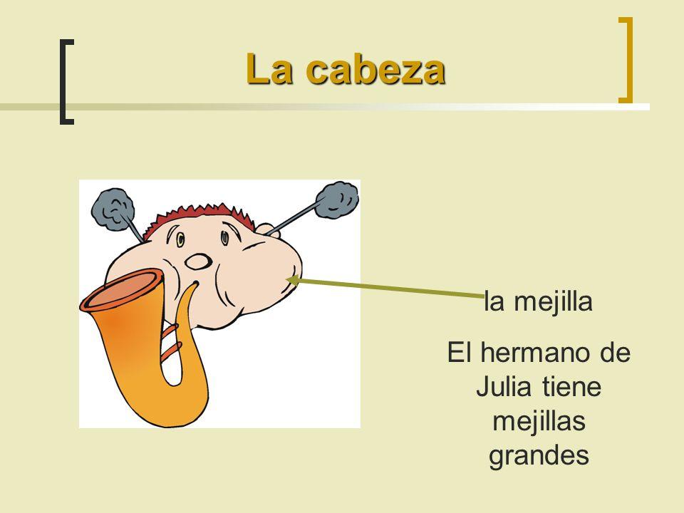 la mejilla El hermano de Julia tiene mejillas grandes La cabeza