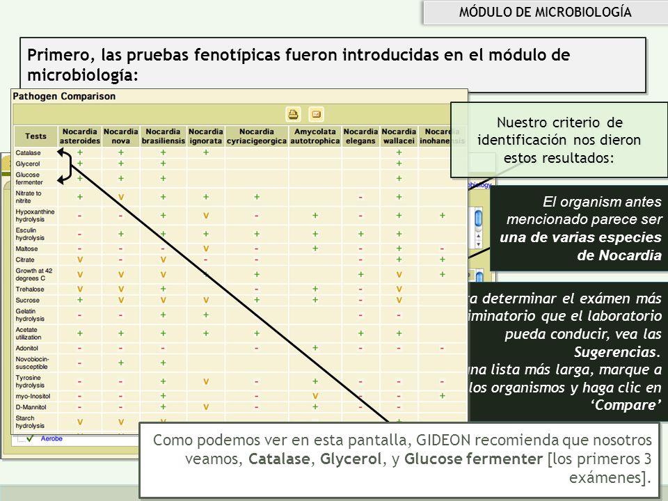 Copyright © 2010 GIDEON Informatics, Inc. All rights reserved www.GIDEONonline.com Primero, las pruebas fenotípicas fueron introducidas en el módulo d