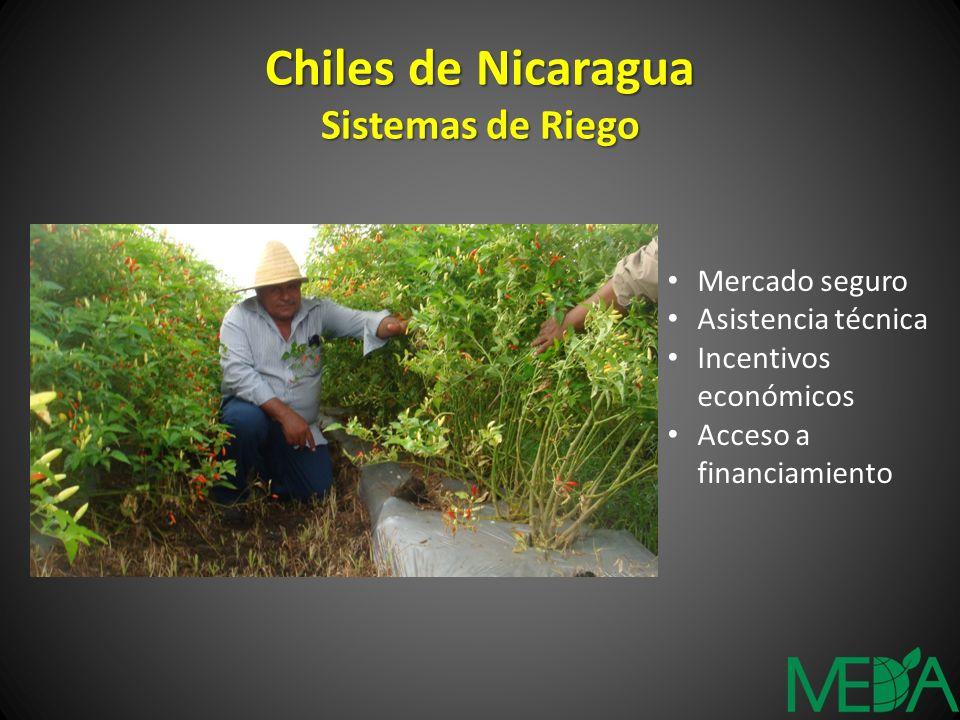 Chiles de Nicaragua Sistemas de Riego Mercado seguro Asistencia técnica Incentivos económicos Acceso a financiamiento