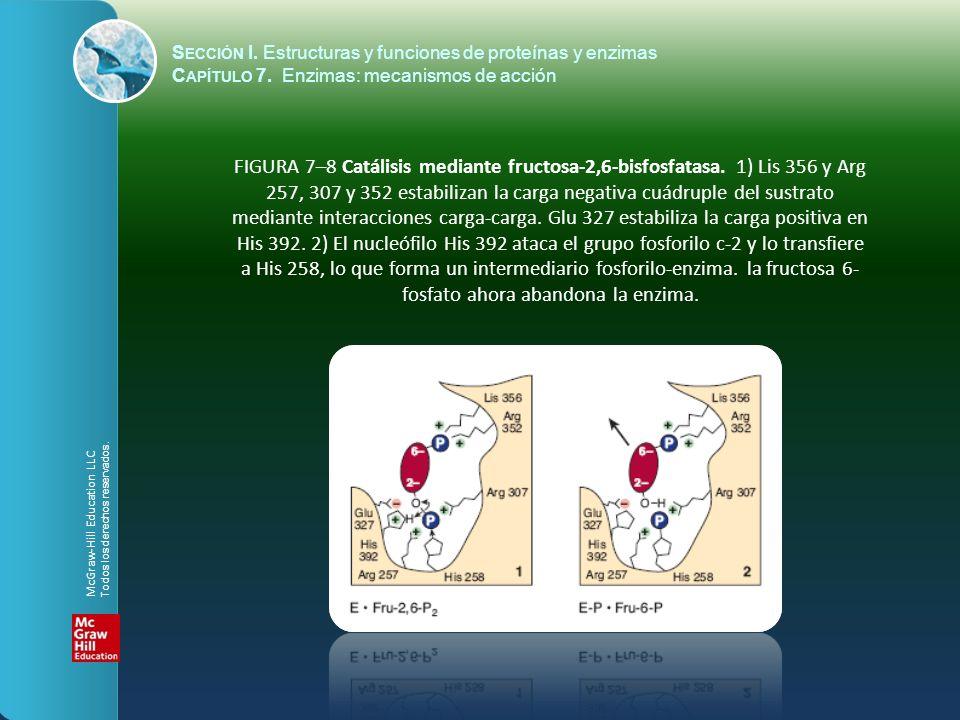 FIGURA 7–8 Catálisis mediante fructosa-2,6-bisfosfatasa. 1) Lis 356 y Arg 257, 307 y 352 estabilizan la carga negativa cuádruple del sustrato mediante