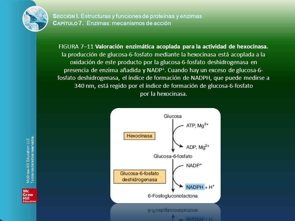 FIGURA 7–11 Valoración enzimática acoplada para la actividad de hexocinasa. la producción de glucosa-6-fosfato mediante la hexocinasa está acoplada a