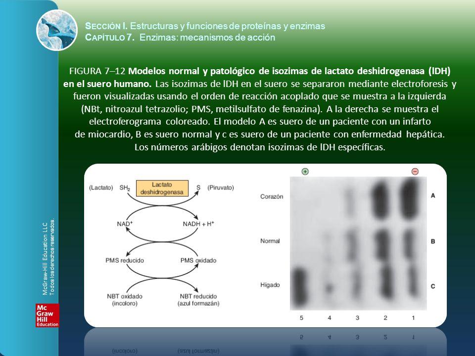FIGURA 7–12 Modelos normal y patológico de isozimas de lactato deshidrogenasa (lDH) en el suero humano. Las isozimas de lDH en el suero se separaron m