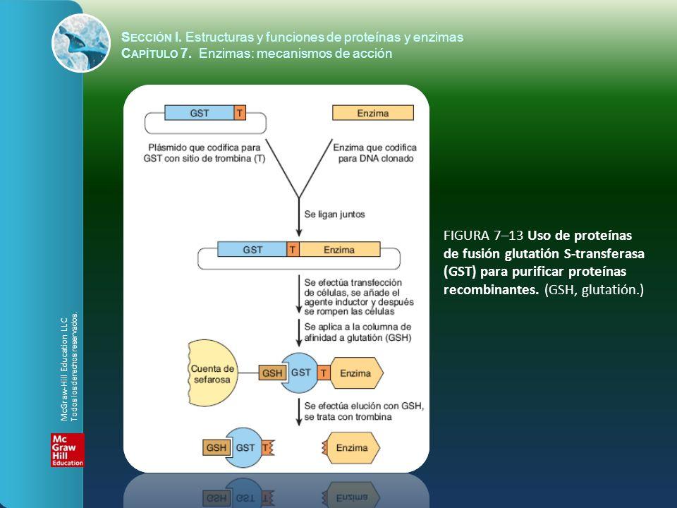 FIGURA 7–13 Uso de proteínas de fusión glutatión S-transferasa (GST) para purificar proteínas recombinantes. (GSH, glutatión.) S ECCIÓN I. Estructuras