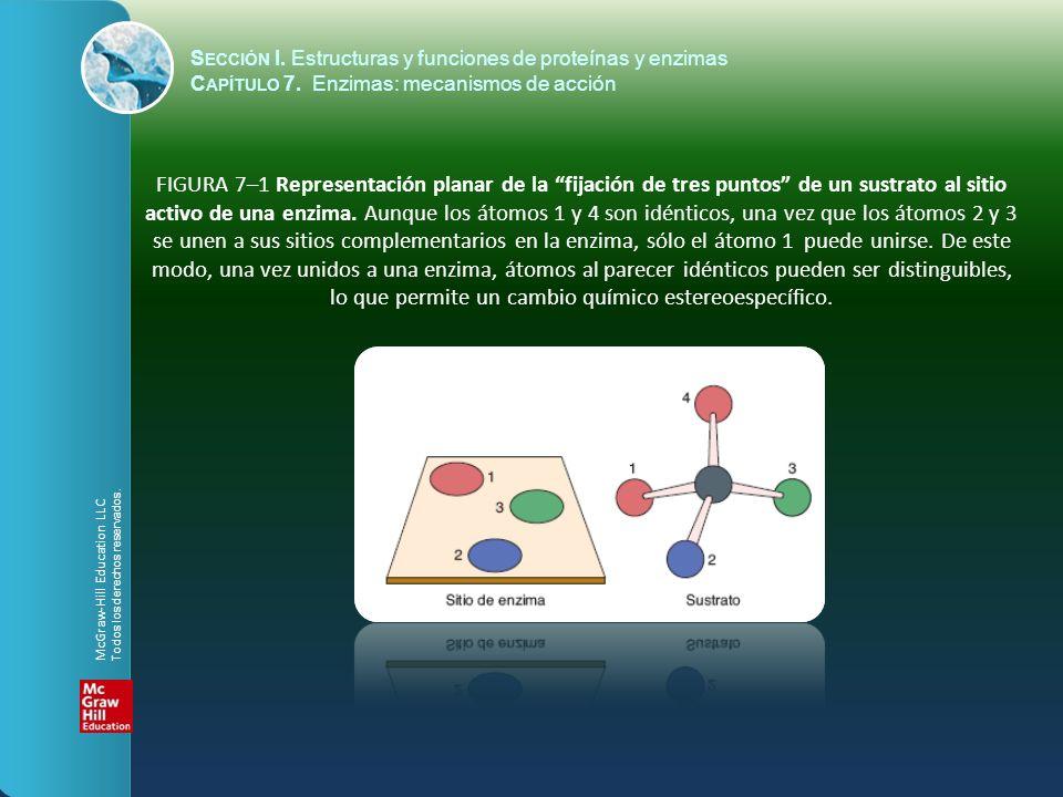 S ECCIÓN I. Estructuras y funciones de proteínas y enzimas C APÍTULO 7. Enzimas: mecanismos de acción FIGURA 7–1 Representación planar de la fijación
