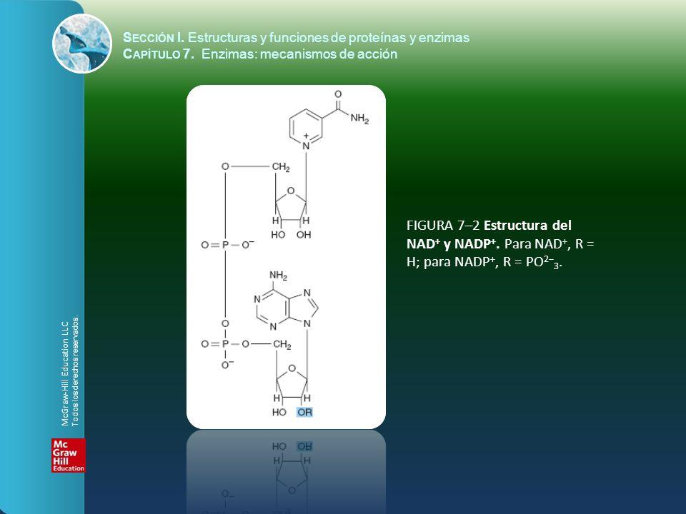 FIGURA 7–2 Estructura del NAD + y NADP +. Para NAD +, R = H; para NADP +, R = PO 2 3. S ECCIÓN I. Estructuras y funciones de proteínas y enzimas C APÍ