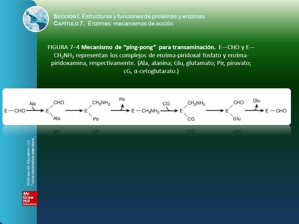 FIGURA 7–4 Mecanismo de ping-pong para transaminación. ECHO y E CH 2 NH 2 representan los complejos de enzima-piridoxal fosfato y enzima- piridoxamina