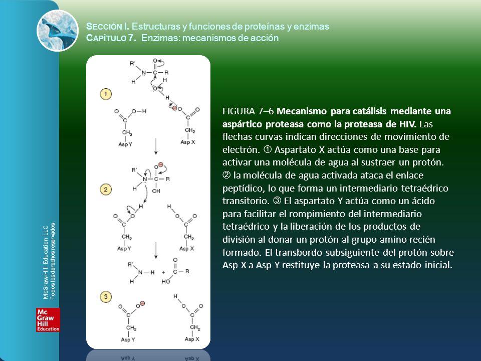FIGURA 7–6 Mecanismo para catálisis mediante una aspártico proteasa como la proteasa de HIV. Las flechas curvas indican direcciones de movimiento de e
