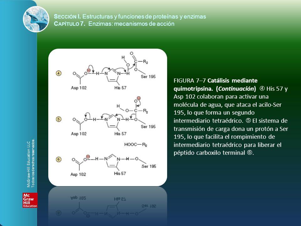 FIGURA 7–7 Catálisis mediante quimotripsina. (Continuación) His 57 y Asp 102 colaboran para activar una molécula de agua, que ataca el acilo-Ser 195,