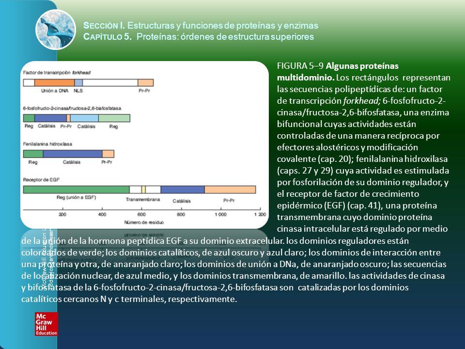 FIGURA 5–9 Algunas proteínas multidominio. Los rectángulos representan las secuencias polipeptídicas de: un factor de transcripción forkhead; 6-fosfof
