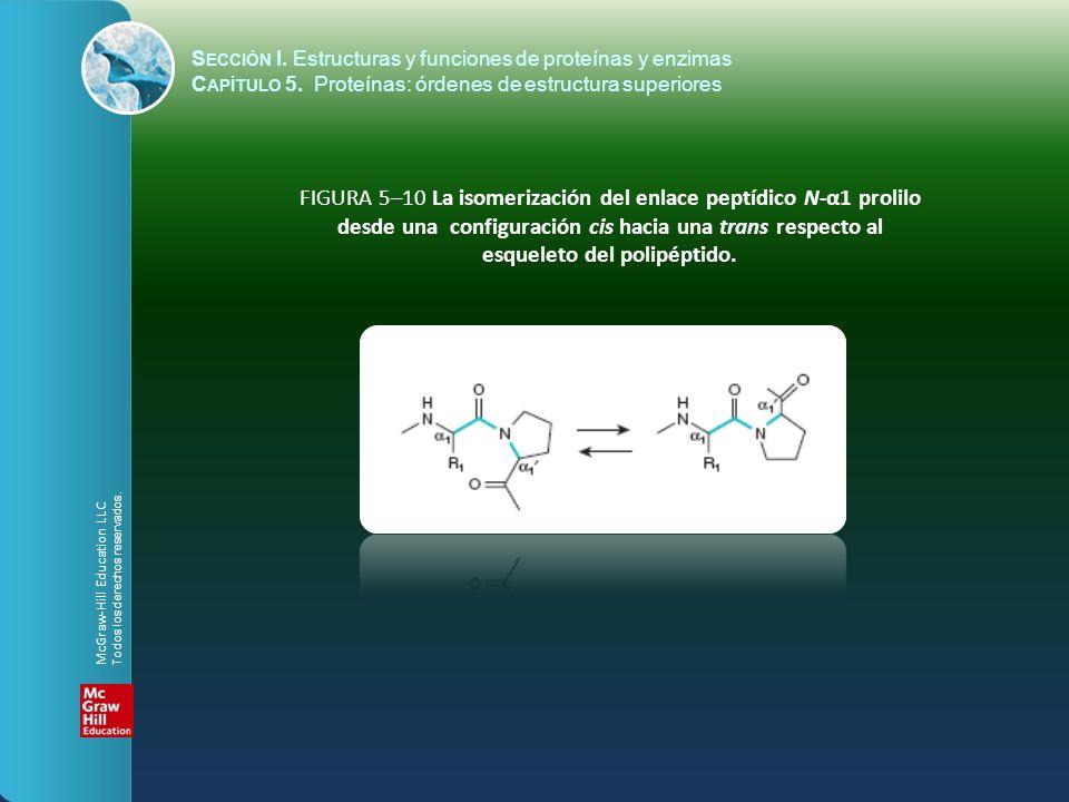 FIGURA 5–10 La isomerización del enlace peptídico N-α1 prolilo desde una configuración cis hacia una trans respecto al esqueleto del polipéptido. McGr