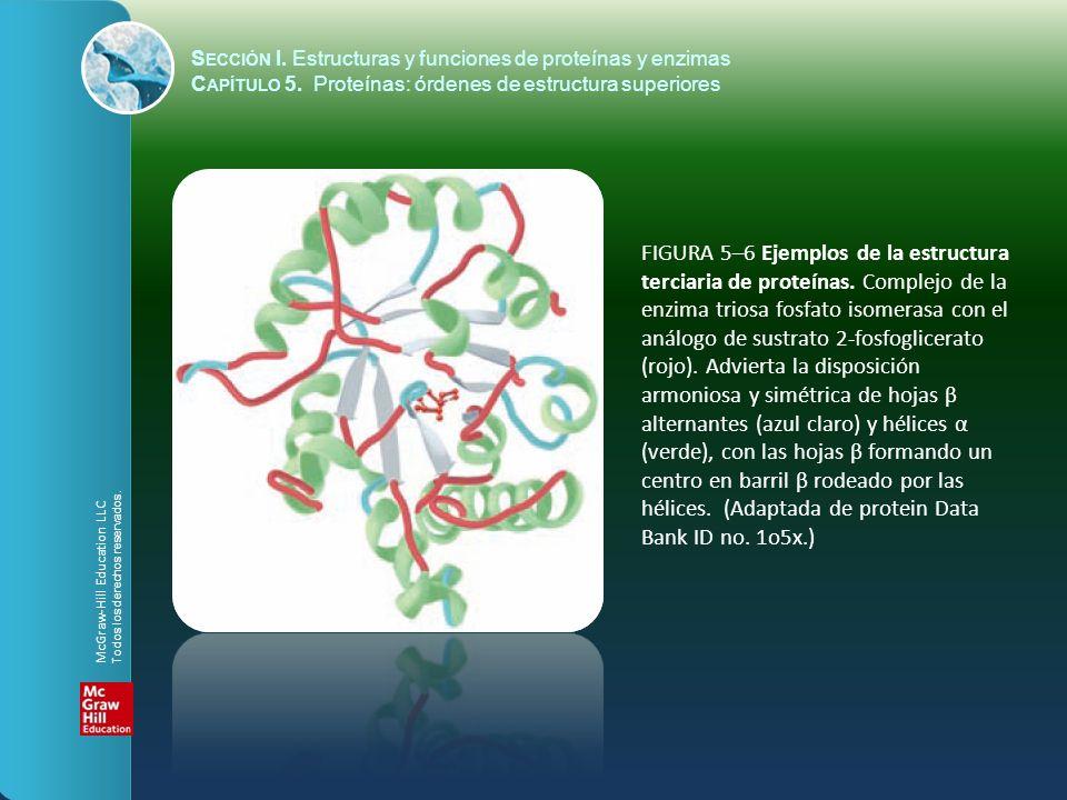 FIGURA 5–6 Ejemplos de la estructura terciaria de proteínas.