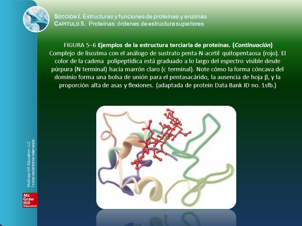 FIGURA 5–6 Ejemplos de la estructura terciaria de proteínas. (Continuación) Complejo de lisozima con el análogo de sustrato penta-N-acetil quitopentao