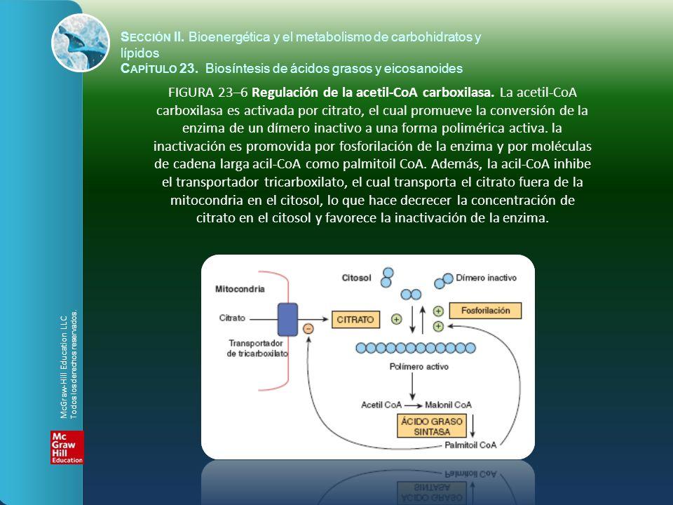 FIGURA 23–6 Regulación de la acetil-CoA carboxilasa. La acetil-CoA carboxilasa es activada por citrato, el cual promueve la conversión de la enzima de