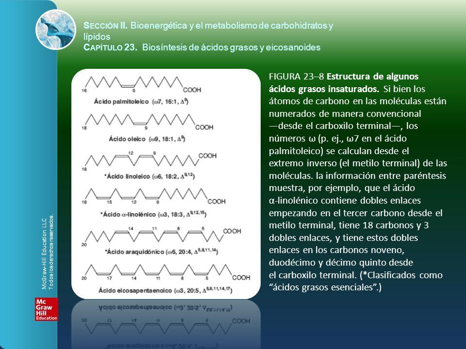 FIGURA 23–8 Estructura de algunos ácidos grasos insaturados. Si bien los átomos de carbono en las moléculas están numerados de manera convencional des