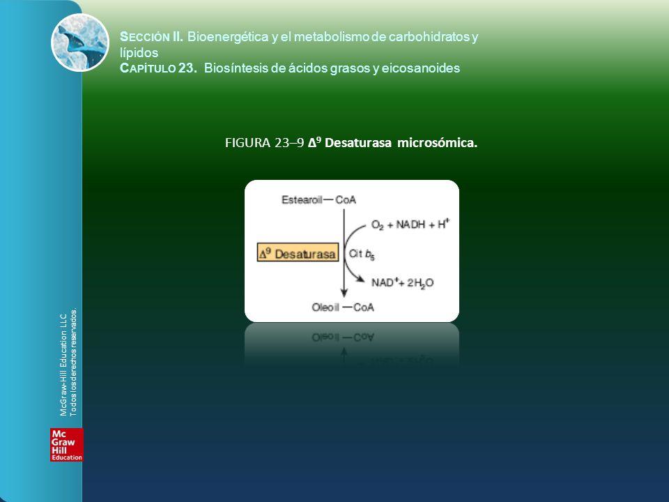 FIGURA 23–9 Δ 9 Desaturasa microsómica. S ECCIÓN II. Bioenergética y el metabolismo de carbohidratos y lípidos C APÍTULO 23. Biosíntesis de ácidos gra