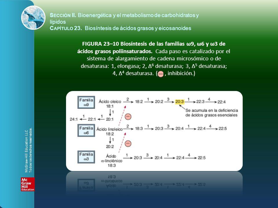 FIGURA 23–10 Biosíntesis de las familias ω9, ω6 y ω3 de ácidos grasos poliinsaturados. Cada paso es catalizado por el sistema de alargamiento de caden