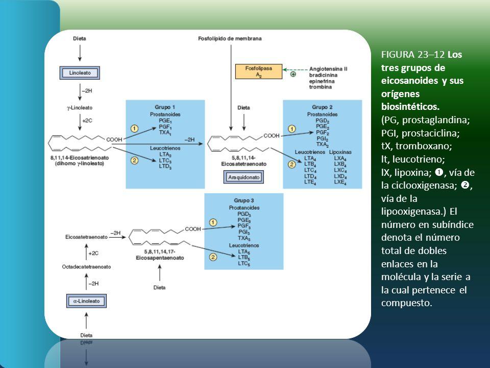 FIGURA 23–12 Los tres grupos de eicosanoides y sus orígenes biosintéticos. (PG, prostaglandina; PGI, prostaciclina; tX, tromboxano; lt, leucotrieno; l