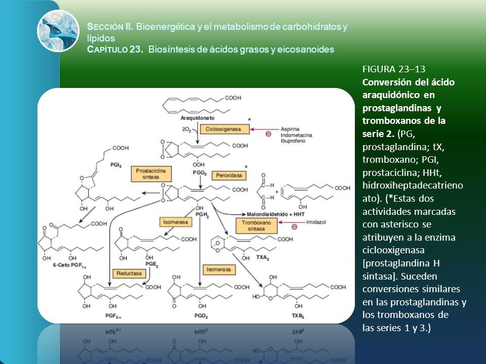 FIGURA 23–13 Conversión del ácido araquidónico en prostaglandinas y tromboxanos de la serie 2. (PG, prostaglandina; tX, tromboxano; PGI, prostaciclina