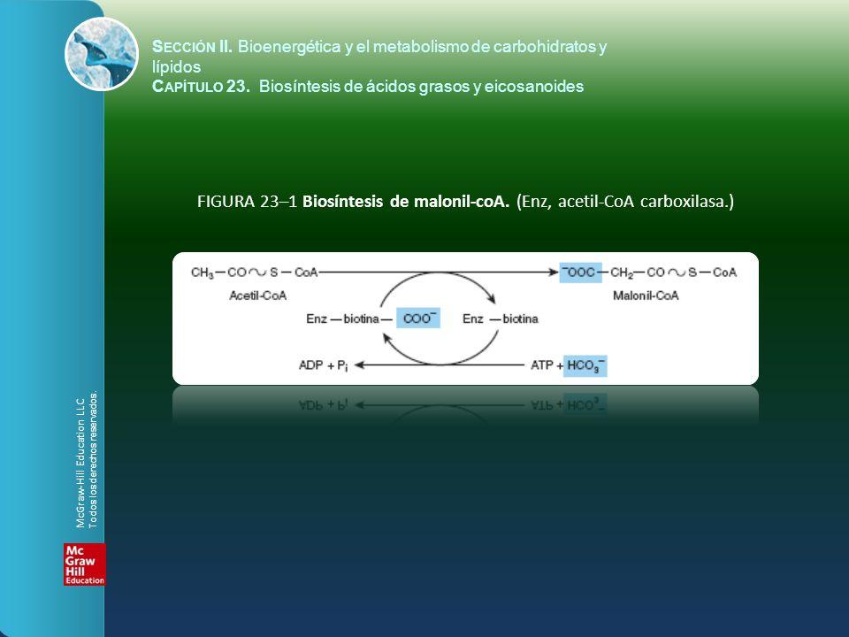 S ECCIÓN II. Bioenergética y el metabolismo de carbohidratos y lípidos C APÍTULO 23. Biosíntesis de ácidos grasos y eicosanoides FIGURA 23–1 Biosíntes
