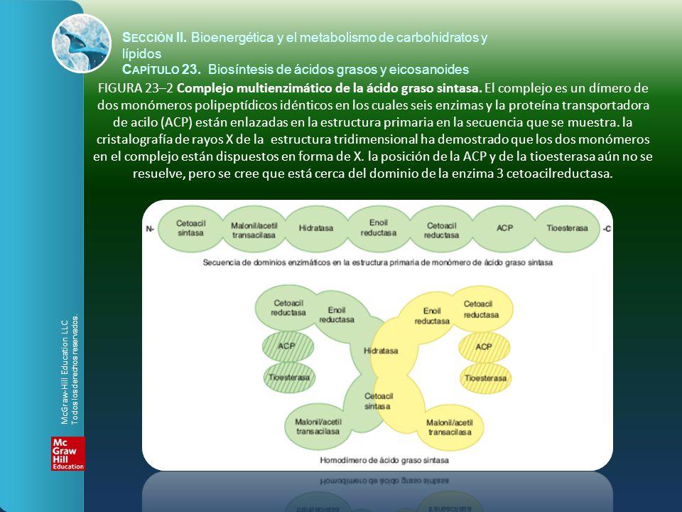 FIGURA 23–2 Complejo multienzimático de la ácido graso sintasa. El complejo es un dímero de dos monómeros polipeptídicos idénticos en los cuales seis