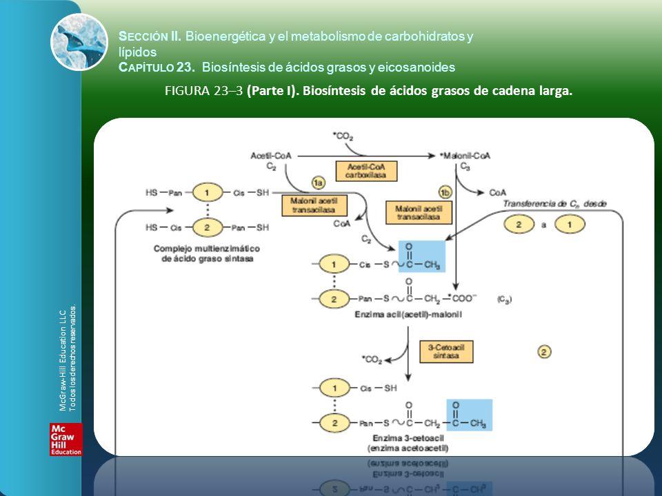 FIGURA 23–3 (Parte I). Biosíntesis de ácidos grasos de cadena larga. S ECCIÓN II. Bioenergética y el metabolismo de carbohidratos y lípidos C APÍTULO