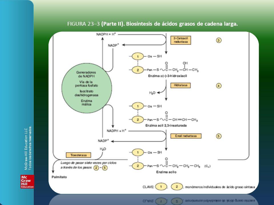 FIGURA 23–3 (Parte II). Biosíntesis de ácidos grasos de cadena larga. McGraw-Hill Education LLC Todos los derechos reservados.