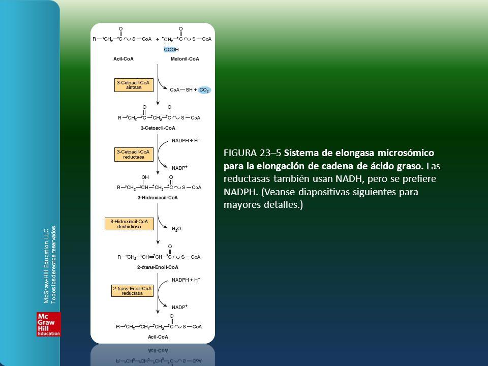 FIGURA 23–5 Sistema de elongasa microsómico para la elongación de cadena de ácido graso. Las reductasas también usan NADH, pero se prefiere NADPH. (Ve