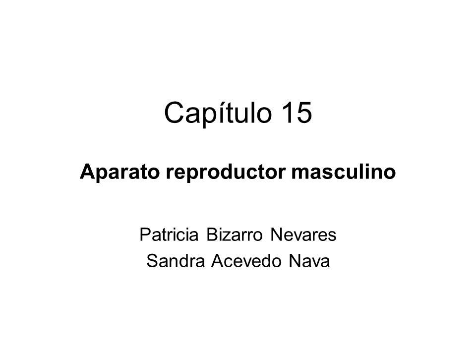 Capítulo 15 Aparato reproductor masculino Patricia Bizarro Nevares Sandra Acevedo Nava