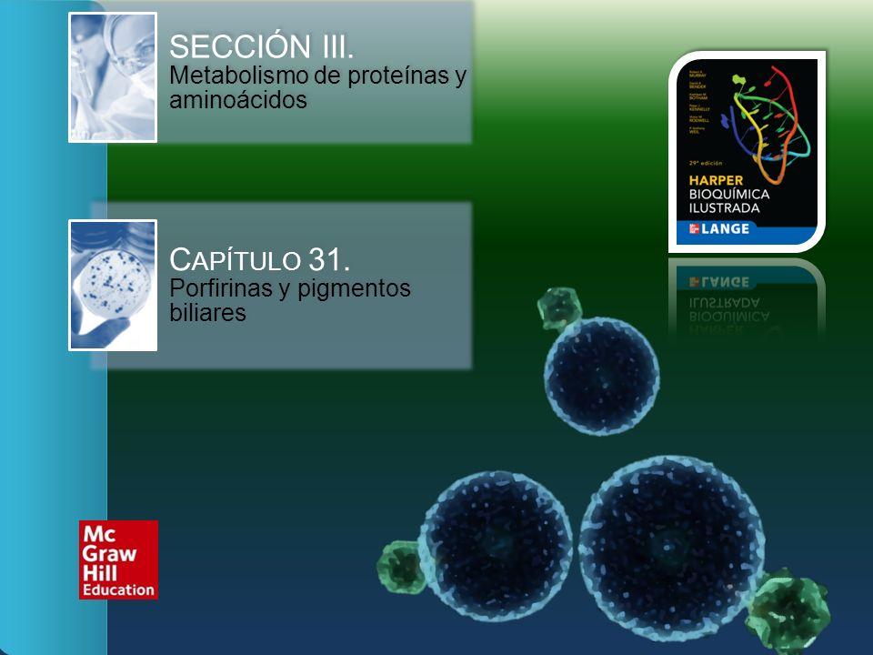 SECCIÓN III. Metabolismo de proteínas y aminoácidos C APÍTULO 31. Porfirinas y pigmentos biliares